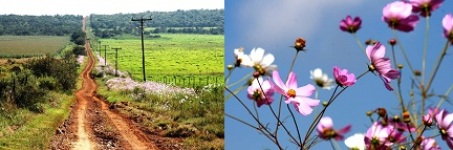 5-Magaliesberg Farm and Cosmos