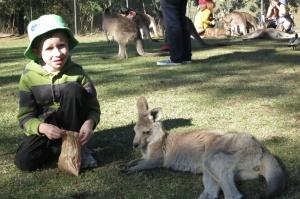 Kaden kangaroo