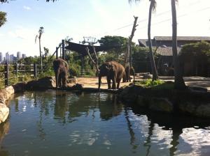 2013-04 April Sydney trip with Garth, ferry, Taronga Zoo 040