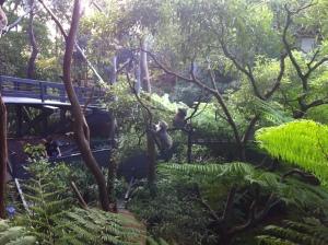 2013-04 April Sydney trip with Garth, ferry, Taronga Zoo 064